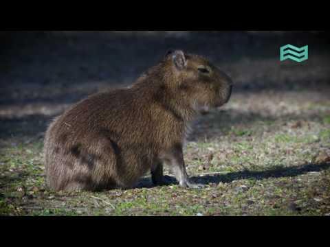 Equilibrios. Parques nacionales: Parque Nacional El Impenetrable - Canal Encuentro HD