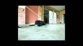 Food Aggression - Resource Guarding Rehabilitation