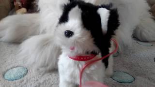 обзор моих мягких игрушек кошек и собак