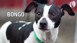 Portland-area pets for adoption Jan. 16