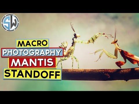 macro-photography:-mantis-standoff