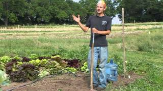 SIW Gardening Video #1: Planting Fig Trees in Zone 7, Part 1