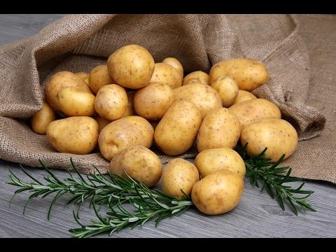Как выглядит картошка гала