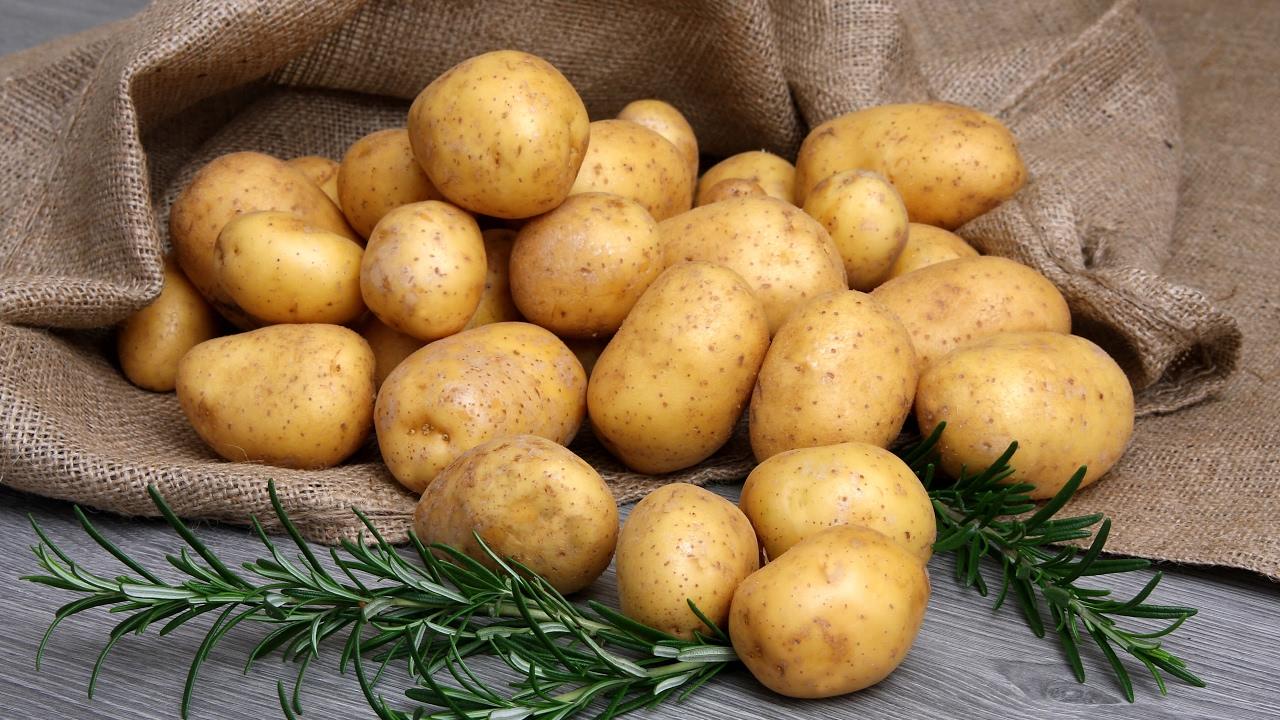 Выращивание картофеля / Идеальный посадочный материал .
