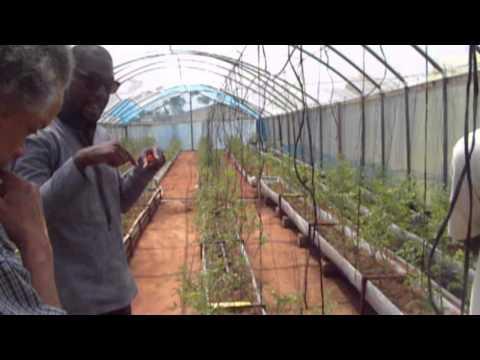 Ghana Aquaponics with S.O.L.V.E.