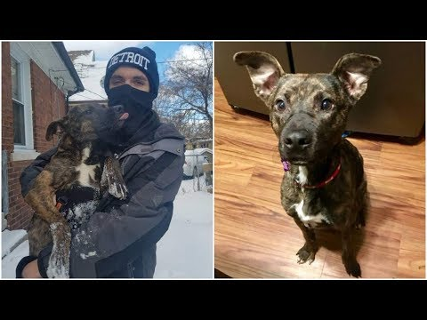 A dog stays all night in a blizzard  only she needs to stay warm, luckily she gets sweet foster