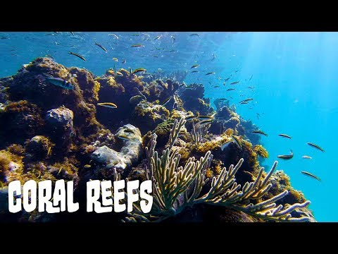 Coral Reef Ecosystems: A General Overview
