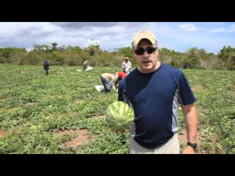 Urban Vertical Farming - Panama