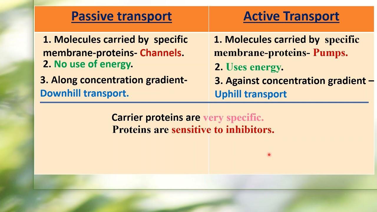 I PUC/ BIOLOGY/ TRANSPORT IN PLANTS-02