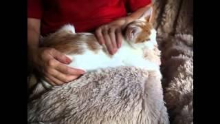 Котик Тишка из приюта в добрые руки!