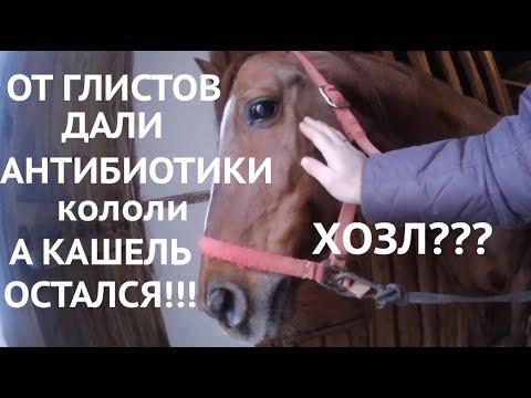 Кашель у лошади, который не проходит или опыт лечения ХОЗЛ