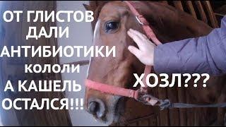 Фото Кашель у лошади который не проходит или опыт лечения ХОЗЛ