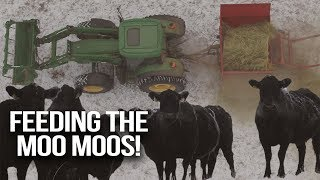 Feeding Cows in Frosty Montana Weather - Slivka Farm Vlog