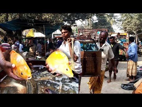 Live Fish In Village Market | Fresh Fish Market In Bangladesh