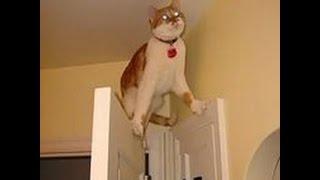 Смешные кошачьи приколы. Видео про кошек