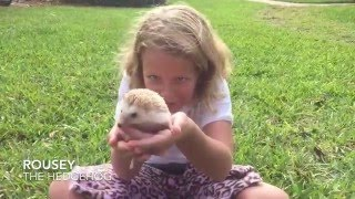 Pet Spotlight: Meet A Hedgehog