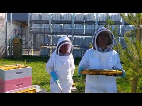 première récolte de miel - leroy merlin mantes buchelay - youtube