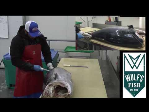 Dexter Outdoors - Wulf's Fish Cutter - Bala