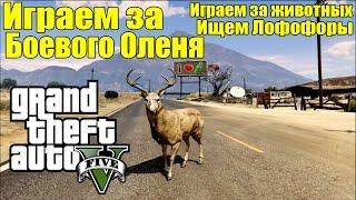 GTA 5 - Играем за БОЕВОГО ОЛЕНЯ [Играем за Животных и Ищем Лофофоры]