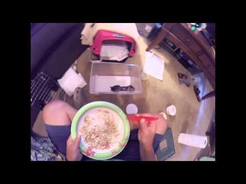 Rehab Baby Chimney Swift Day 8 Feeding Time Augusta Ga