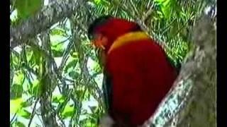 Parrots chat