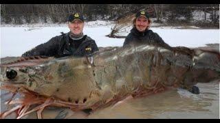 Chuyện lạ khó tin - Bắt được tôm khổng lồ nặng 145kg [Chuyện lạ bốn phương]