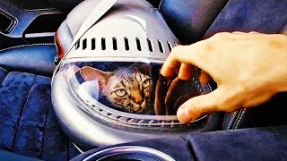 5 Amazing Pet Gadgets You MUST HAVE! ▶8