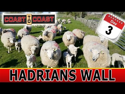 Chased By Roman Sheep! Day 3 of 7