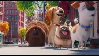 Тайная жизнь домашних животных, трейлер 3