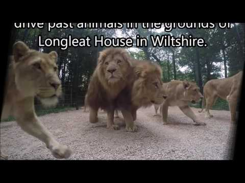The History of British Zoos - A Timeline