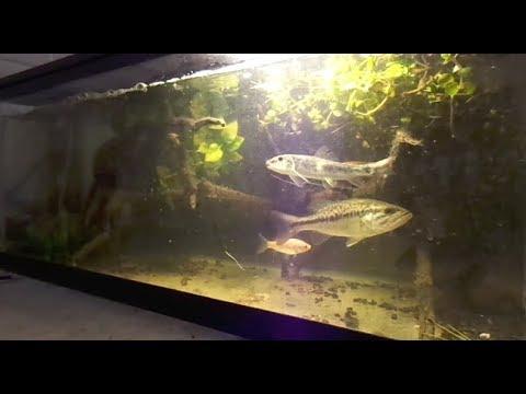 Brand New WILD Fish TANK!!!