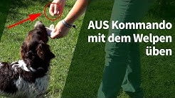 Welpenerziehung ► AUS Kommando mit dem Welpen üben ► Hundekommandos