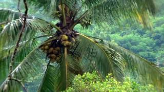 Video HUNTING DERKUKU 4... rice harvest episode download MP3, 3GP, MP4, WEBM, AVI, FLV Agustus 2018