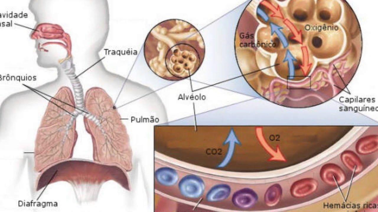 Efeitos do tempero de fumar