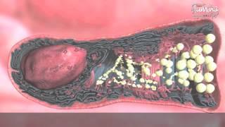 La Célula Caliciforme de la vía respiratoria, una visión integrada de procesos celulares