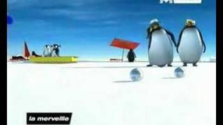 Pigloo:le Ragga Des Pingouins