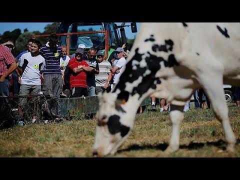 إشكاليات اتفاقية حصص إنتاج الحليب الأوروبية  - 13:22-2018 / 7 / 16
