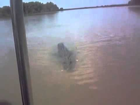 Crocodile attacks fishing boat in Australia