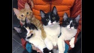 Беременная кошка пришла к дверям незнакомого дома. Она просила помощи у людей...