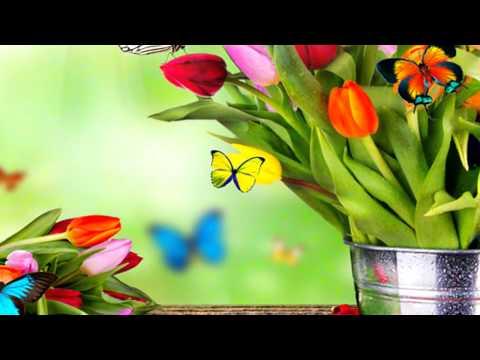 Фото цветов розы, тюльпаны, орхидеи