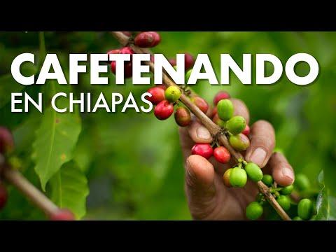 Cafeteando en Chiapas