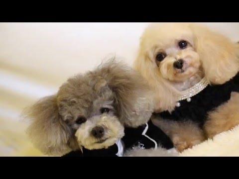 Dog Fashion Show 2016