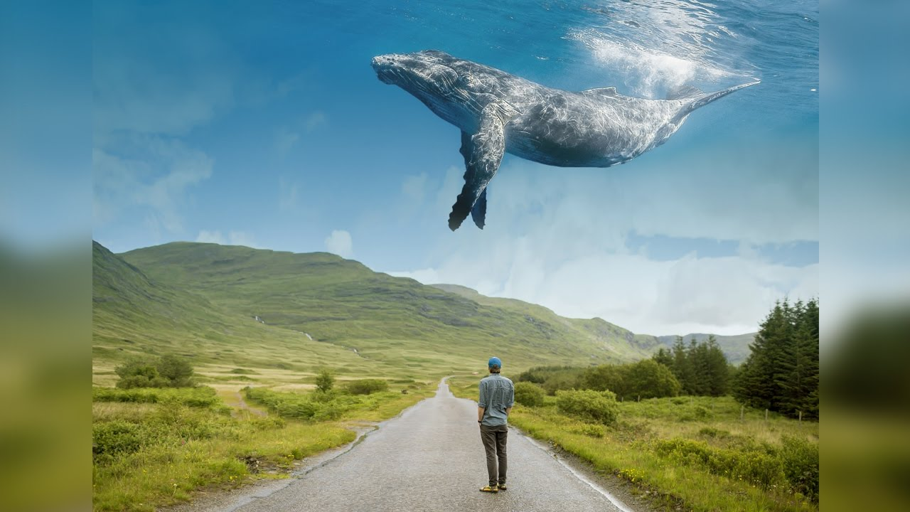 Whale Up The Sky Photoshop Tutorial Manipulation - YouTube