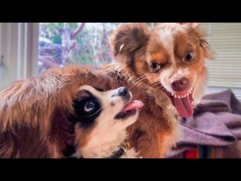 Funniest  Dogs  And Cats  Videos  Pets From Tik Tok  Try Not To Laugh Cute Animals