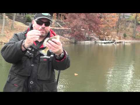Fall Bluegill Fishing