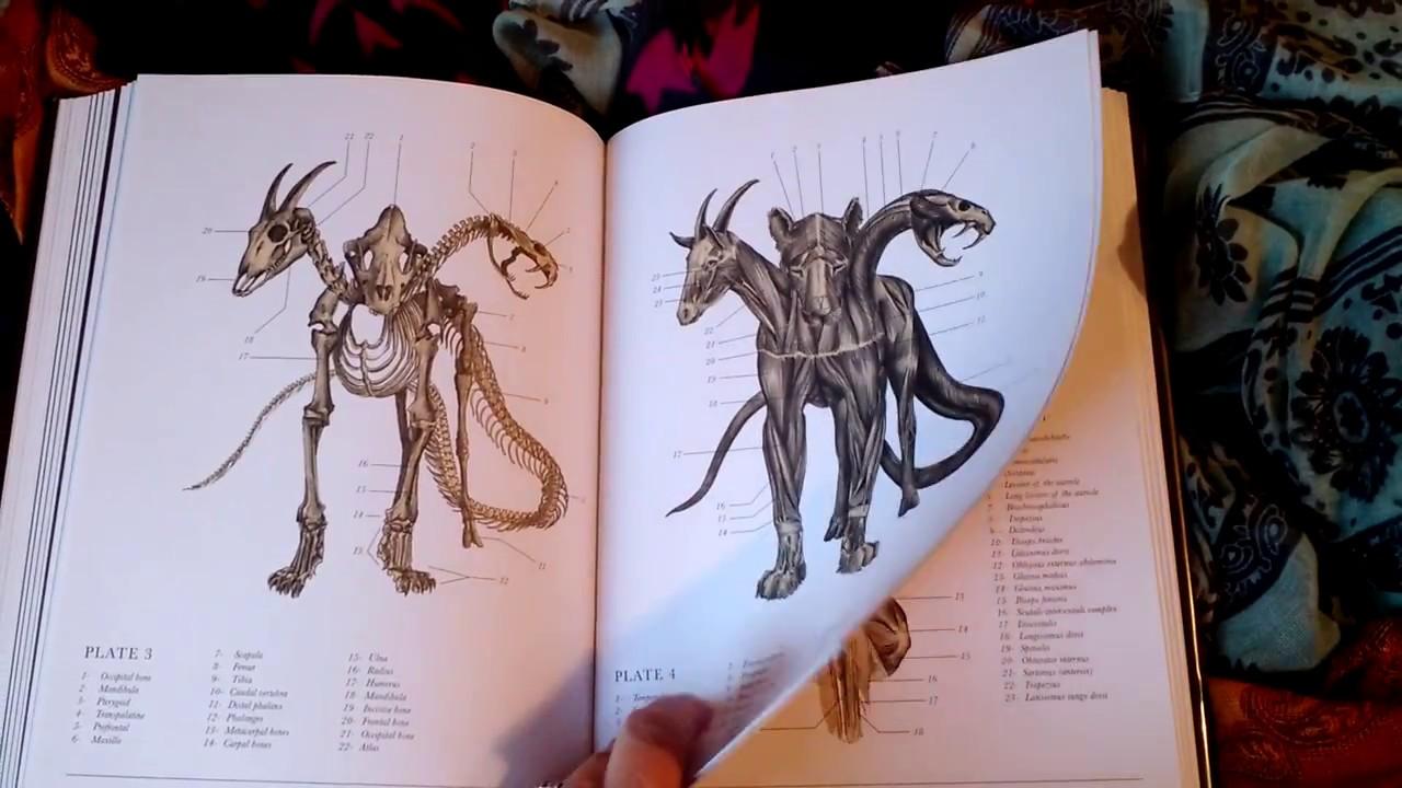 maxresdefault - Tra Frankenstein e Lovecraft: Il codice delle creature estinte