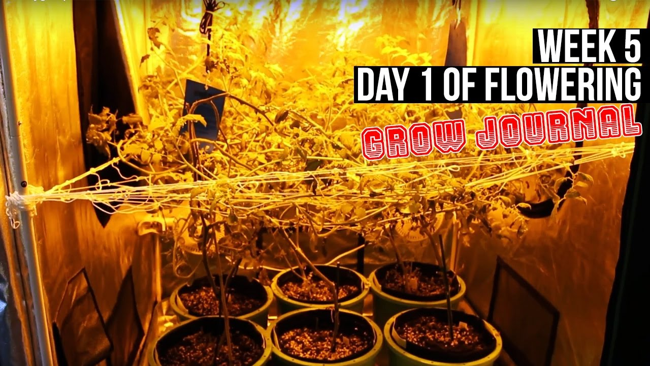 Complete Hydro Grow Tent Kit System - Week 5 Grow Journal | Flowering in Your Garden Begins! : hydro tents - memphite.com