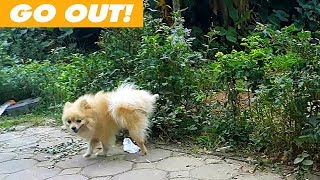 Farm Animals Funny Puppy Video -  Cute Baby Dog Want To Go Out