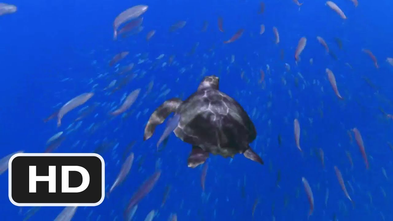 Turtle: The Incredible Journey Turtle The Incredible Journey Movie 2011 Trailer HD YouTube