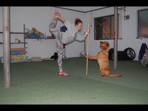 Running Dogs - Dog Dancing, Einblicke in das Hallentraining